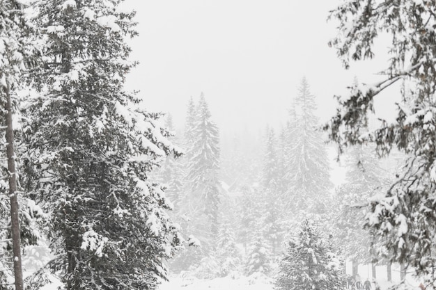 Vista para floresta coberta de neve