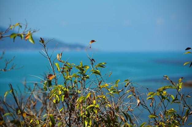 Vista para o mar na praia de bang rack, ilha de samui