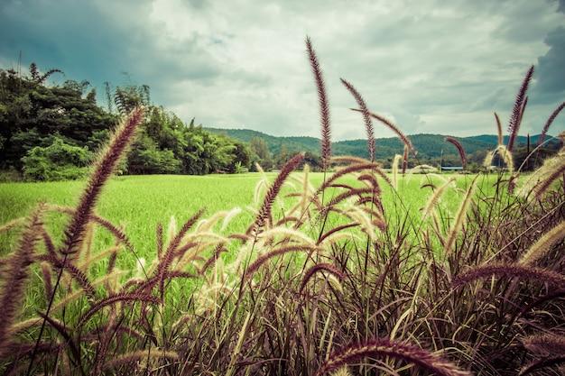 Vista perto da grama verde, natureza ao ar livre