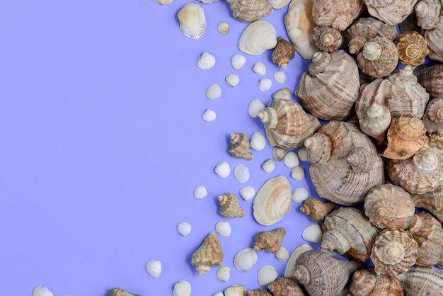 Vista plana leigos, superior de vários tipos de conchas no fundo roxo.