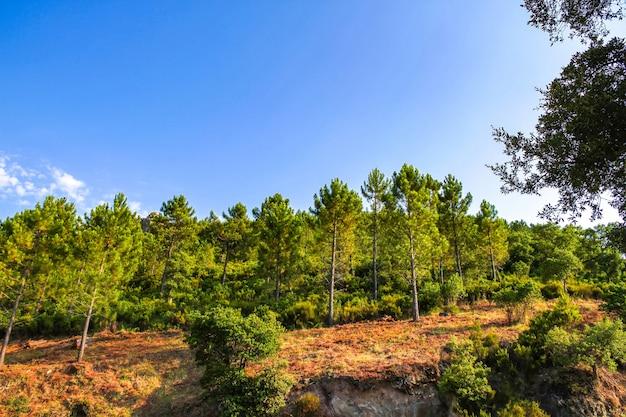 Vista sobre as árvores na zona rural do sul da frança