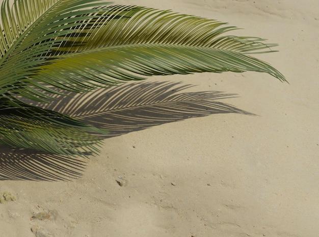Vista superior 3d composição de folhas de palmeira verdes