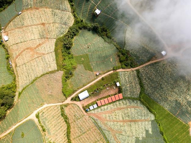 Vista superior aérea, acima da paisagem, natureza, cenário, árvores, florestas,