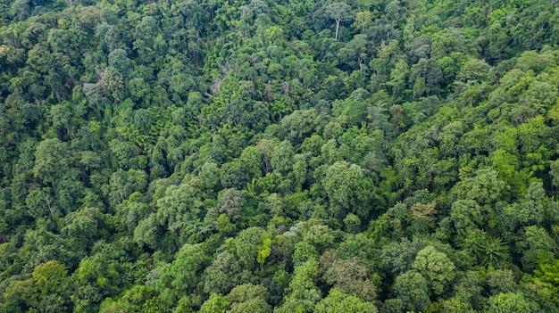 Vista superior aérea da floresta textura vista de cima