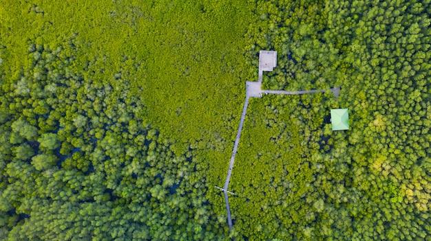Vista superior aérea da ponte de madeira de mangue com conservação da floresta de mangue na tailândia