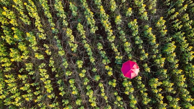 Vista superior aérea de um greenfield