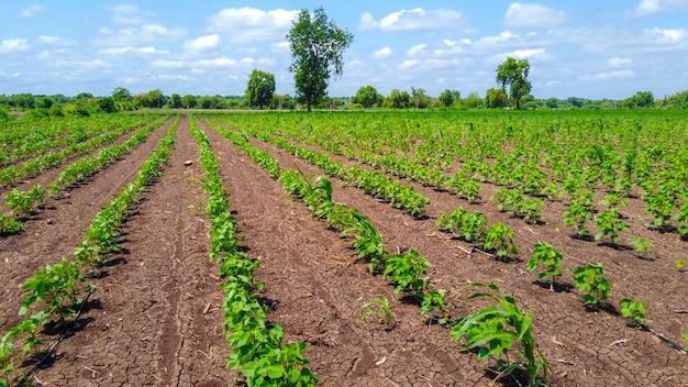 Vista superior aérea do campo da agricultura