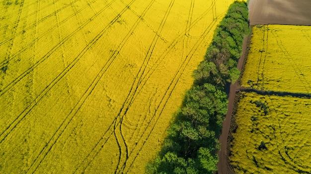Vista superior aérea do campo de canola de estupro amarelo e estrada secundária de cima