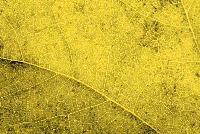 Vista superior ampliada da folha iluminada