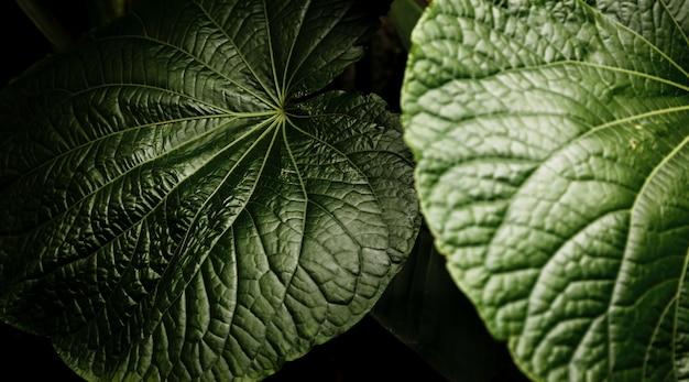 Vista superior bonita closeup de folhas