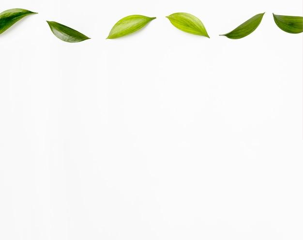 Vista superior coleção de folhas verdes, com espaço de cópia