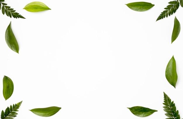 Vista superior coleção de folhas verdes fundo