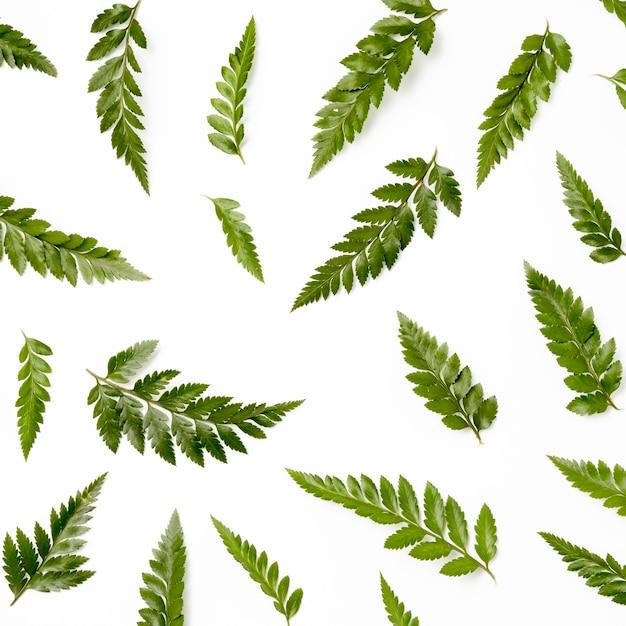 Vista superior coleção de folhas verdes