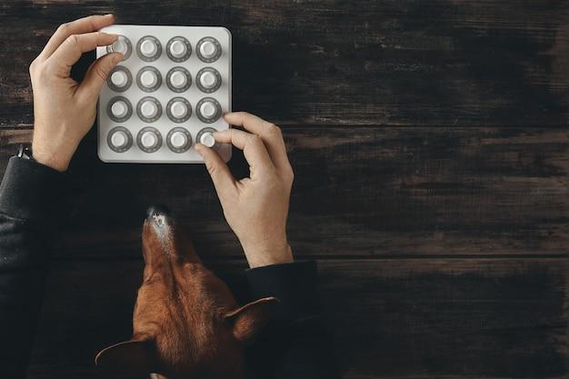 Vista superior com dois botões giratórios de mãos no controle do mixer midi sem fio e uma curiosa aparência de basenji