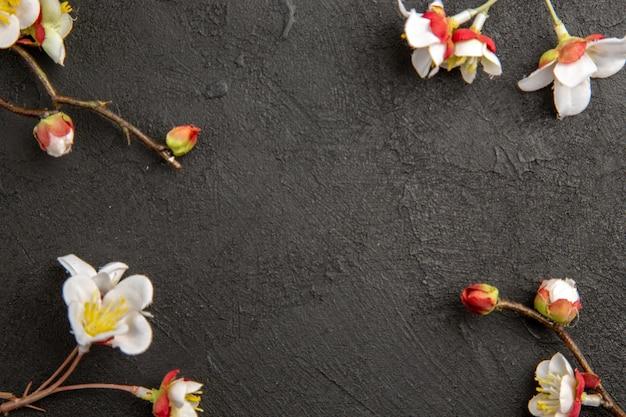 Vista superior com flores brancas em fundo escuro planta beleza elegância foto colorida