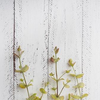 Vista superior conceito botânico com espaço de cópia Foto gratuita