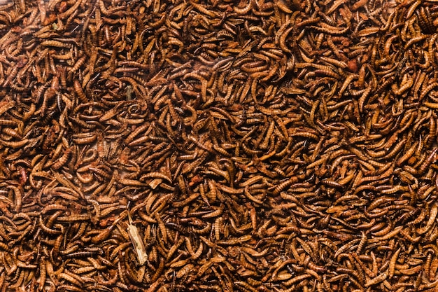 Vista superior cozida larvas de insetos