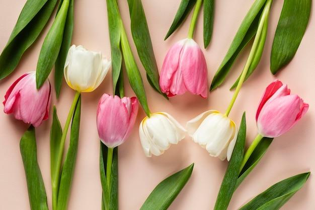 Vista superior da coleção de tulipas