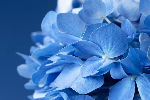 Vista superior da composição do conceito de segunda-feira azul com close-up de flores