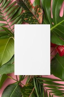 Vista superior da composição mínima de plantas tropicais