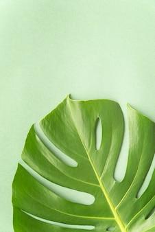 Vista superior da composição mínima de plantas tropicais Foto gratuita