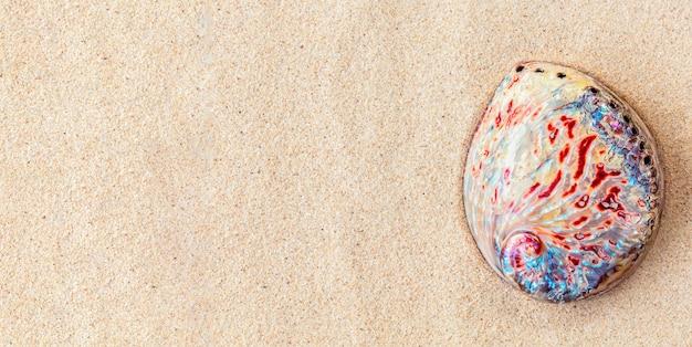 Vista superior da concha de abalone colorida na areia branca e limpa, plano de fundo