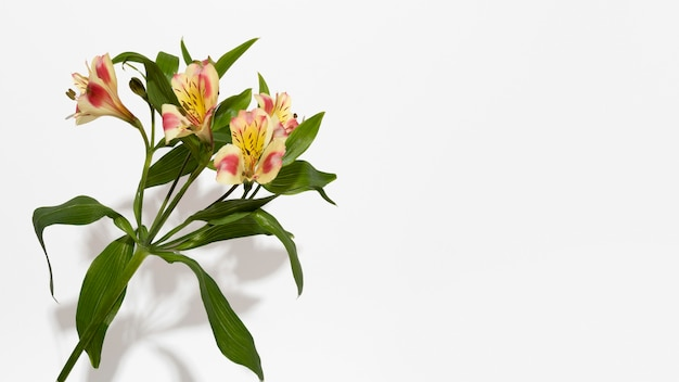 Vista superior da flor da flor