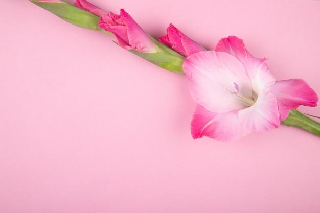 Vista superior da flor de gladíolo cor rosa isolada no fundo rosa com espaço de cópia
