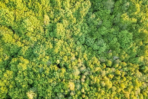 Vista superior da floresta verde