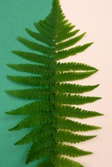 Vista superior da folha de samambaia
