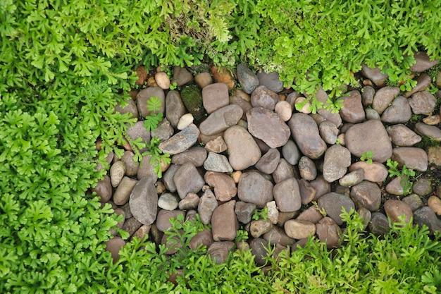 Vista superior da folha verde samambaia e rochas forma fresca no jardim decorar fundo design simples