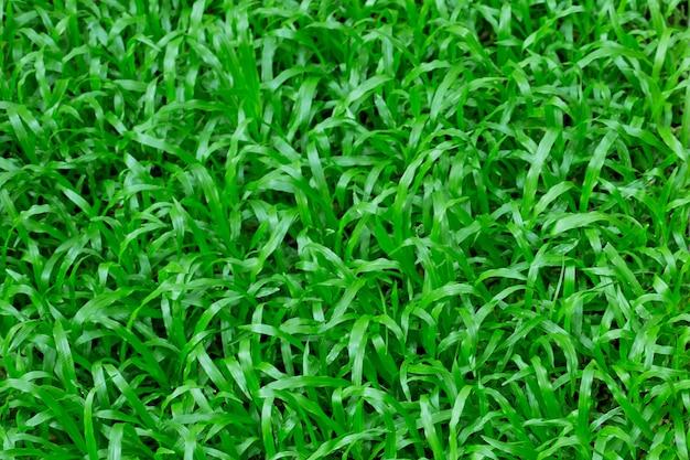 Vista superior da grama verde com seixos ou pedra no jardim.