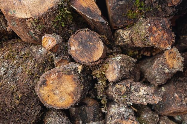 Vista superior da madeira seca
