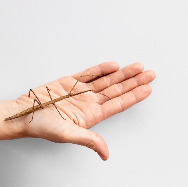 Vista superior da mão com inseto