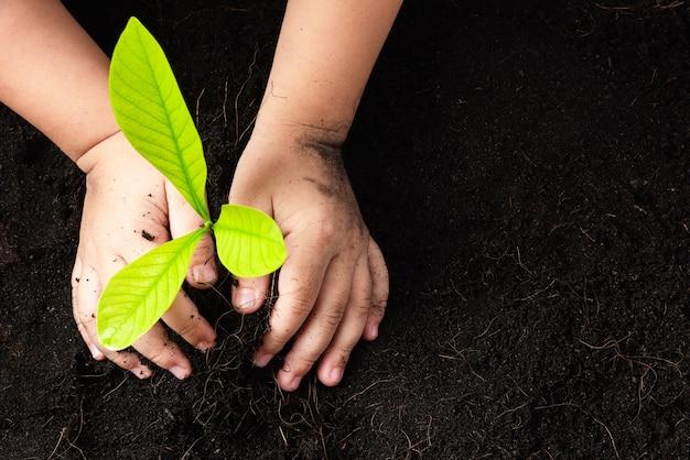 Vista superior da mão de uma criança plantando mudas de árvores jovens em solo preto no jardim