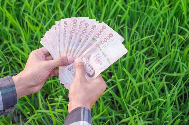 Vista superior da mão do agricultor segurando notas tailandesas com arroz verde na fazenda