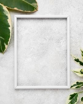 Vista superior da moldura com folhas de plantas