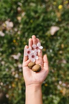 Vista superior da mulher segurando conchas de amêndoa e flores de amêndoa na palma da mão no campo. início surpreendente da primavera. foco seletivo na mão dela.