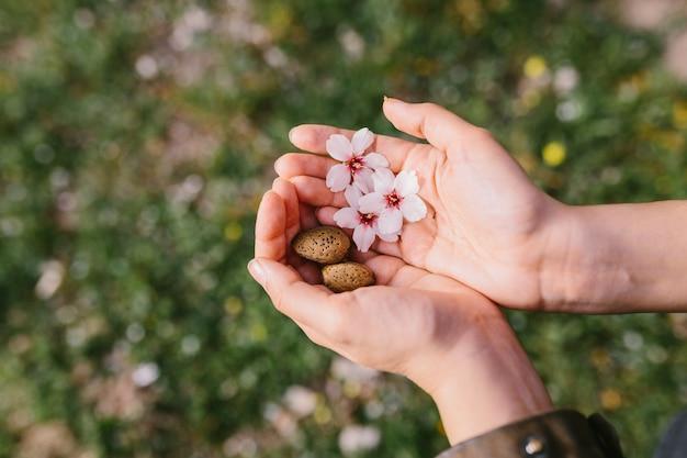 Vista superior da mulher segurando conchas de amêndoa e flores de amêndoa nas palmas das mãos no campo. início surpreendente da primavera. foco seletivo nas mãos dela.
