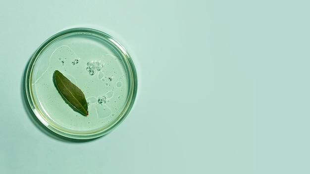 Vista superior da placa de petri com gel transparente dentro da folha verde fresca
