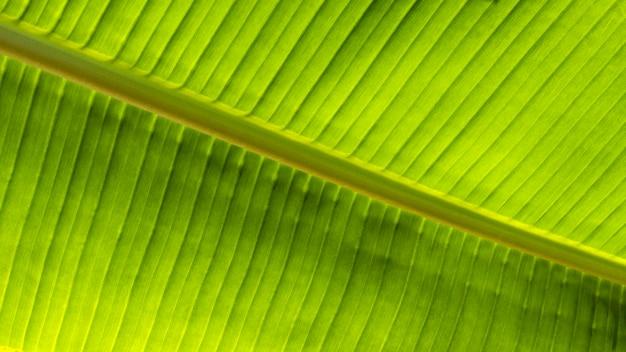 Vista superior da planta de folha tropical