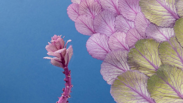 Vista superior da planta e folhas da primavera