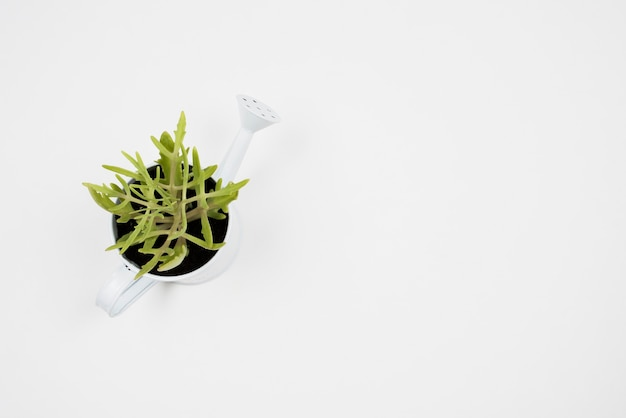 Vista superior da planta em regador