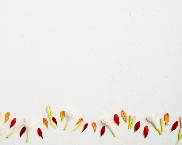 Vista superior da primavera multicolorida deixa com espaço de cópia