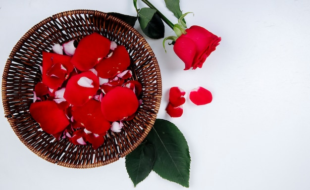 Vista superior da rosa vermelha e pétalas de flores em uma cesta de vime em fundo branco, com espaço de cópia