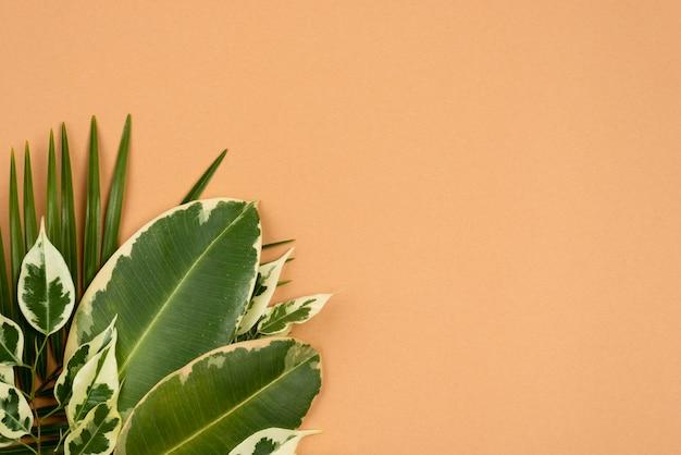 Vista superior da seleção de folhas da planta com espaço de cópia