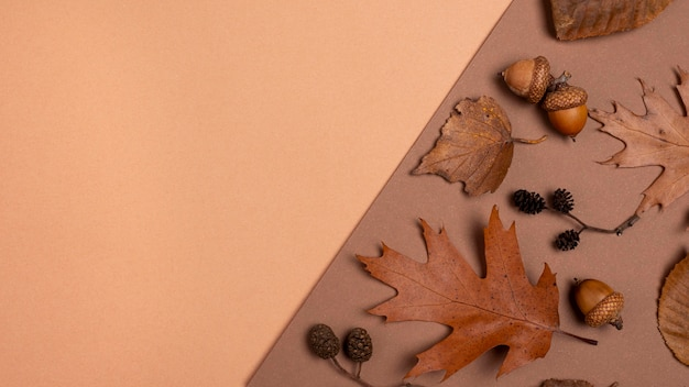 Vista superior da seleção monocromática de folhas