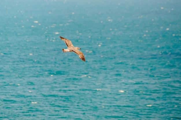 Vista superior da silhueta da gaivota a voar. pássaro voa sobre o mar.