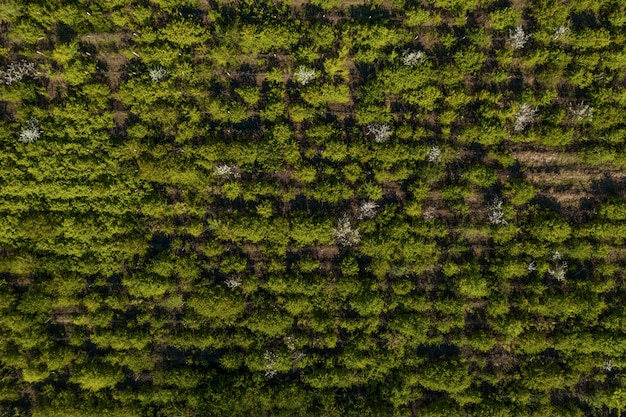 Vista superior da textura de árvores