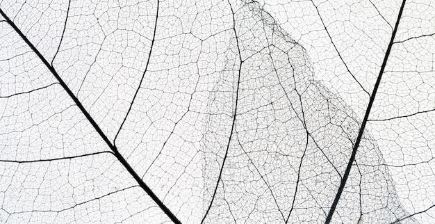 Vista superior da textura de folha transparente